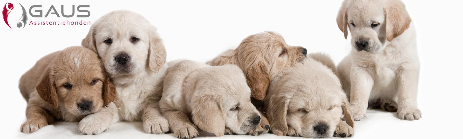 Geleidehonden
